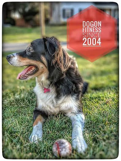 DogOn Fitness Dog