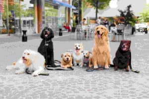 Happy dogs In Bethesda