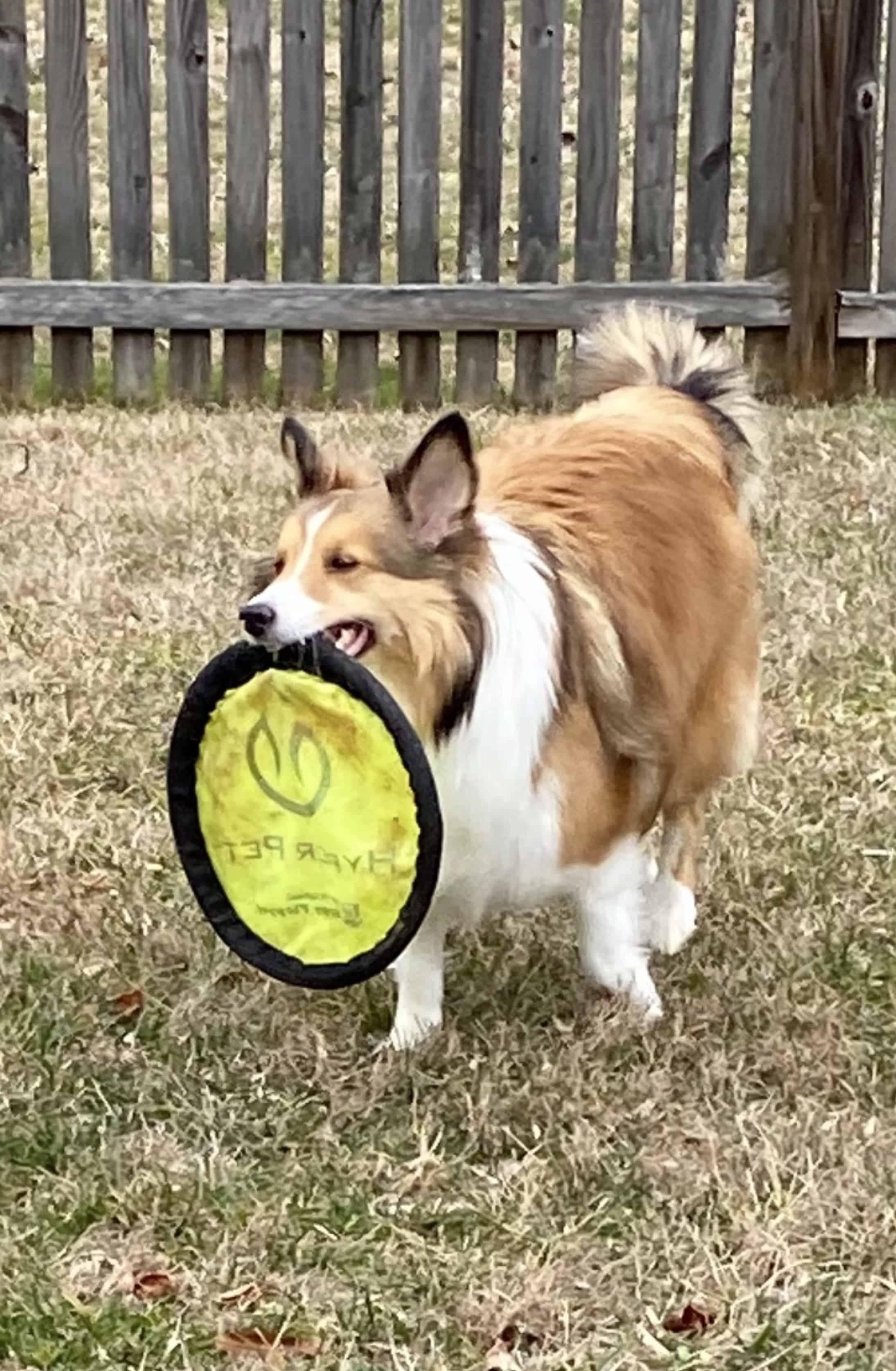 Frisbee fun